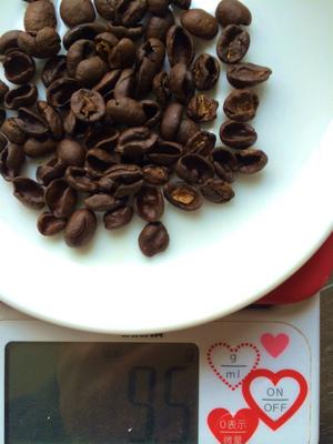 s20貝殻豆測定.jpg